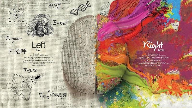 Полушария мозга человека
