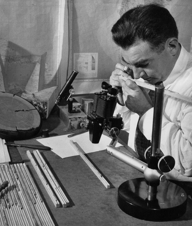 Эдмунд Шульман - человек, который открыл самое старое дерево в мире