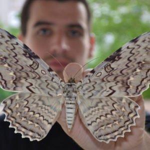 Какая самая большая бабочка на свете