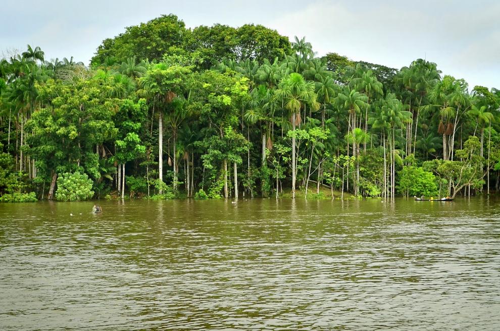 Вода Амазонки