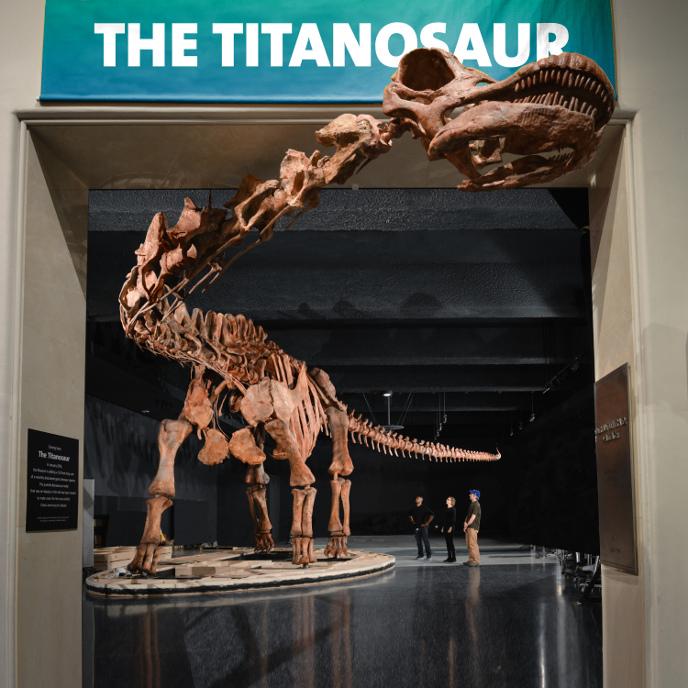 Патаготитан в Американском музее естественной истории, Нью-Йорк, США