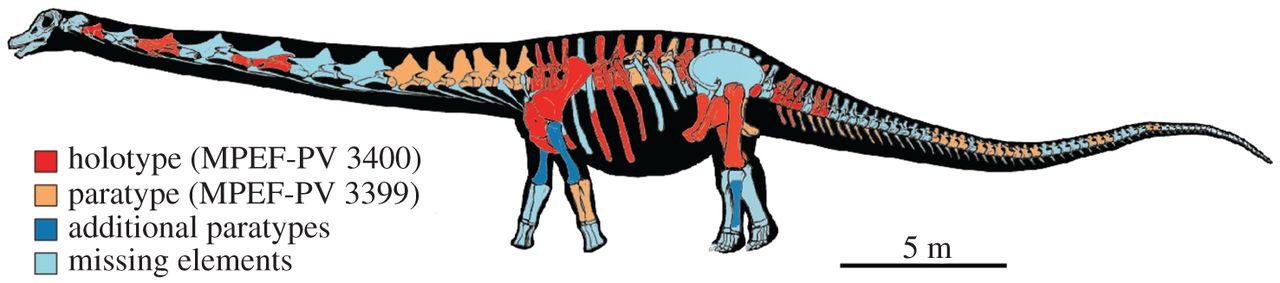 Реконструкция скелета патаготитана