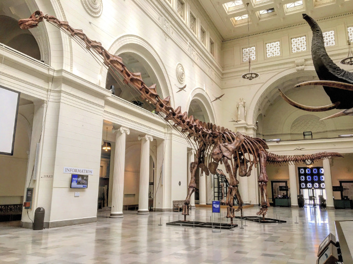 Патаготитан в музее Чикаго