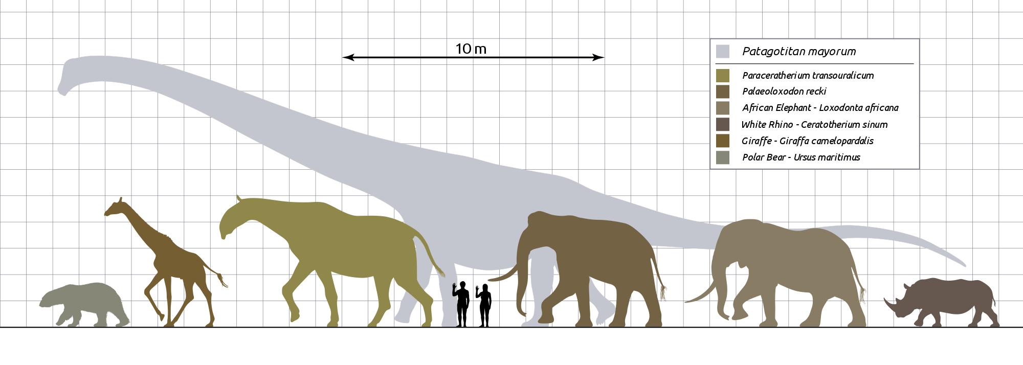 Сравнение потаготитана с другими животными